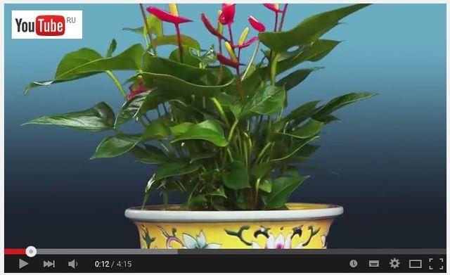 полив комнатных растений Олджи Джи Ол 12см