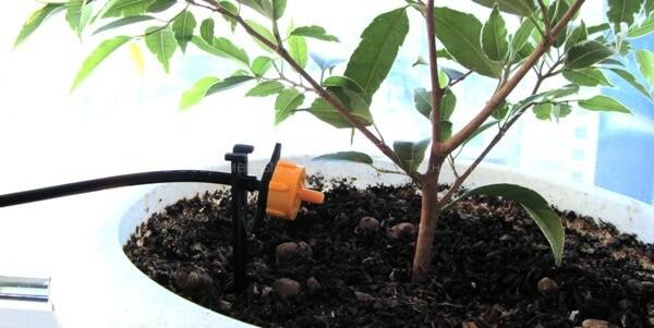 Установка наружной капельницы около растения